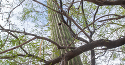 Arizona-focused Elim eyes Cactus potential